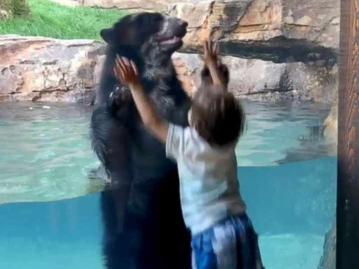 Niño Brinca Con Un Oso, Oso Andino, Niño, Zoológico, Nashville, Tennessee