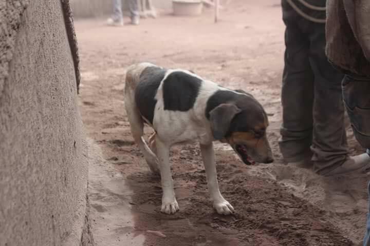 perro-familia-guatemala-volcan-de-fuego