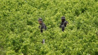 Cultivo de coca en Colombia alcanzó cifra récord en 2017