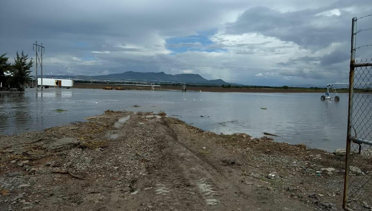 Lluvias benefician al campo en Guanajuato
