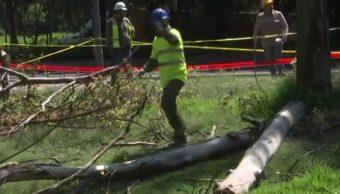 Inicia rehabilitación del parque Avenida Lomas, en Chapultepec