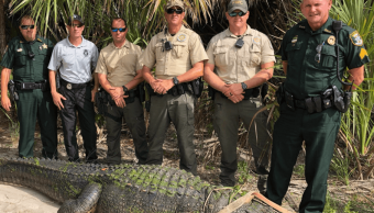 Capturan caimán de 4 metros en parque de Florida