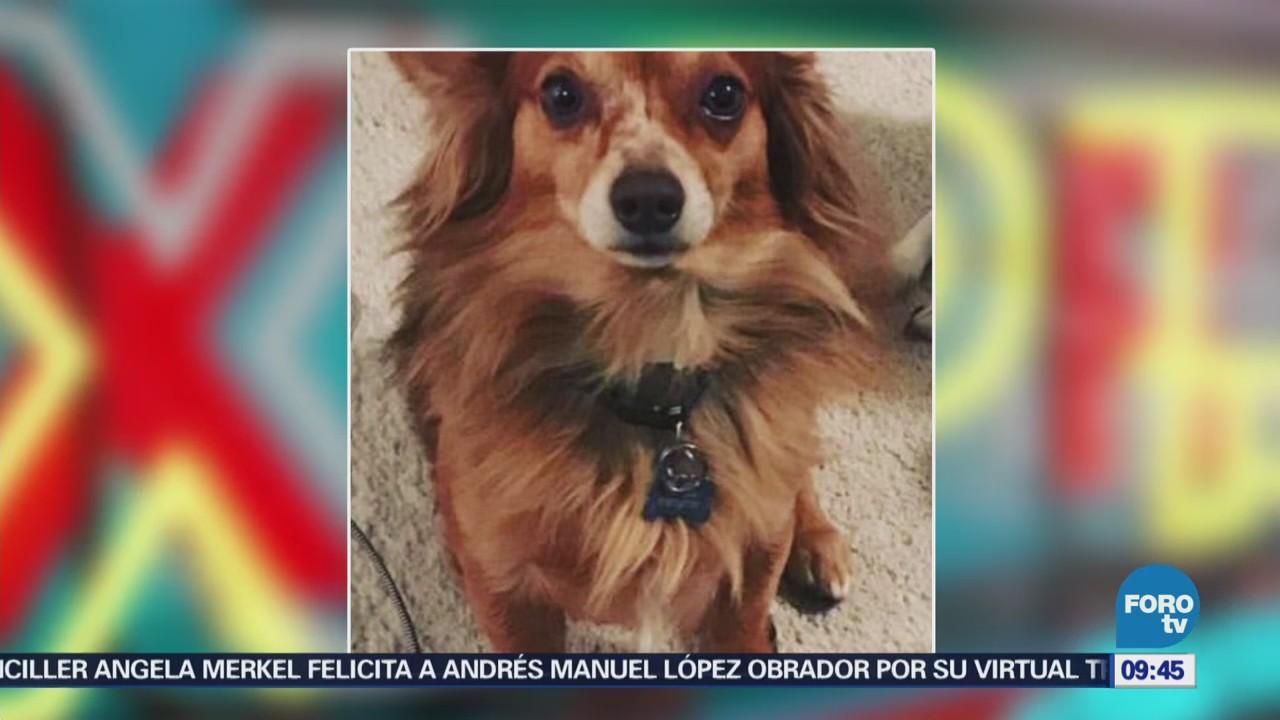 #LoEspectaculardeME: Pepe Aguilar culpa a empleado de aerolínea por muerte de mascota