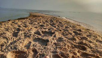Polonia cierra playas por bacteria causada alta temperatura