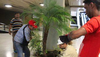 Siembra de palma africana se populariza en Campeche