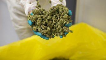 SCJN avala uso médico de marihuana y la muerte digna en CDMX