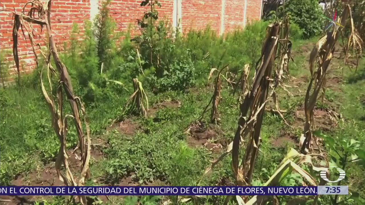 Campesinos pierden cosechas en Puebla, culpan a Volkswagen