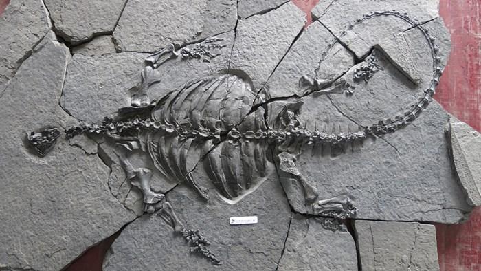 Descubren fósil de tortuga de hace 228 millones de años