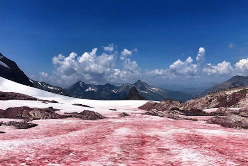 Nieve sangrienta, extraño fenómeno tiñe hielo rojo