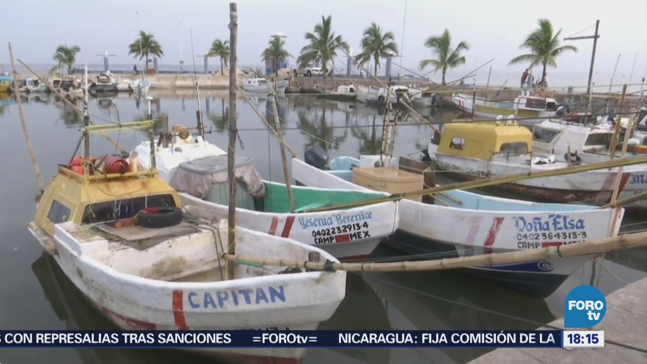 Pescadores Campeche Inician Captura Pulpo Temporada