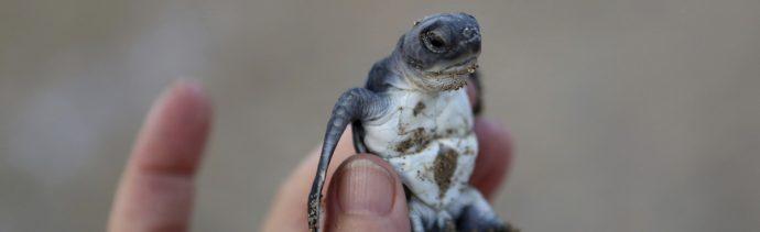 Fiesta Tortugas Peligro Extinción Isla Video