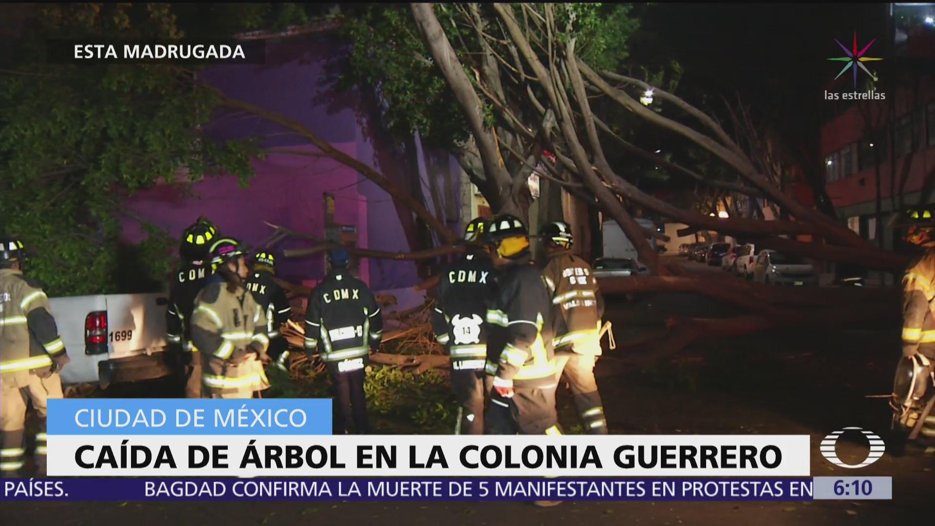 Cae árbol en la colonia Guerrero, CDMX