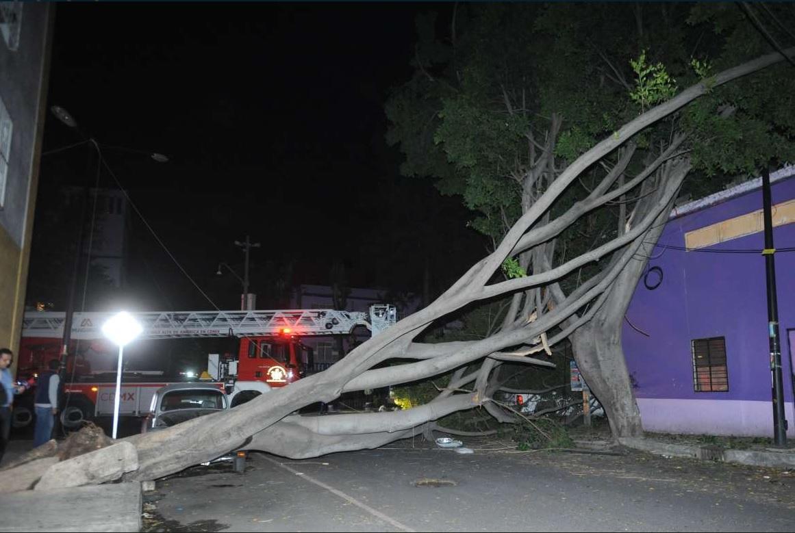 Caída de árbol afecta cableado de la colonia Guerrero, CDMX