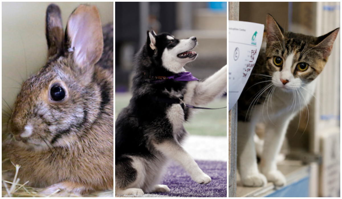 Mascotas Perros Gatos Enfermedad Padecimiento Infecciones