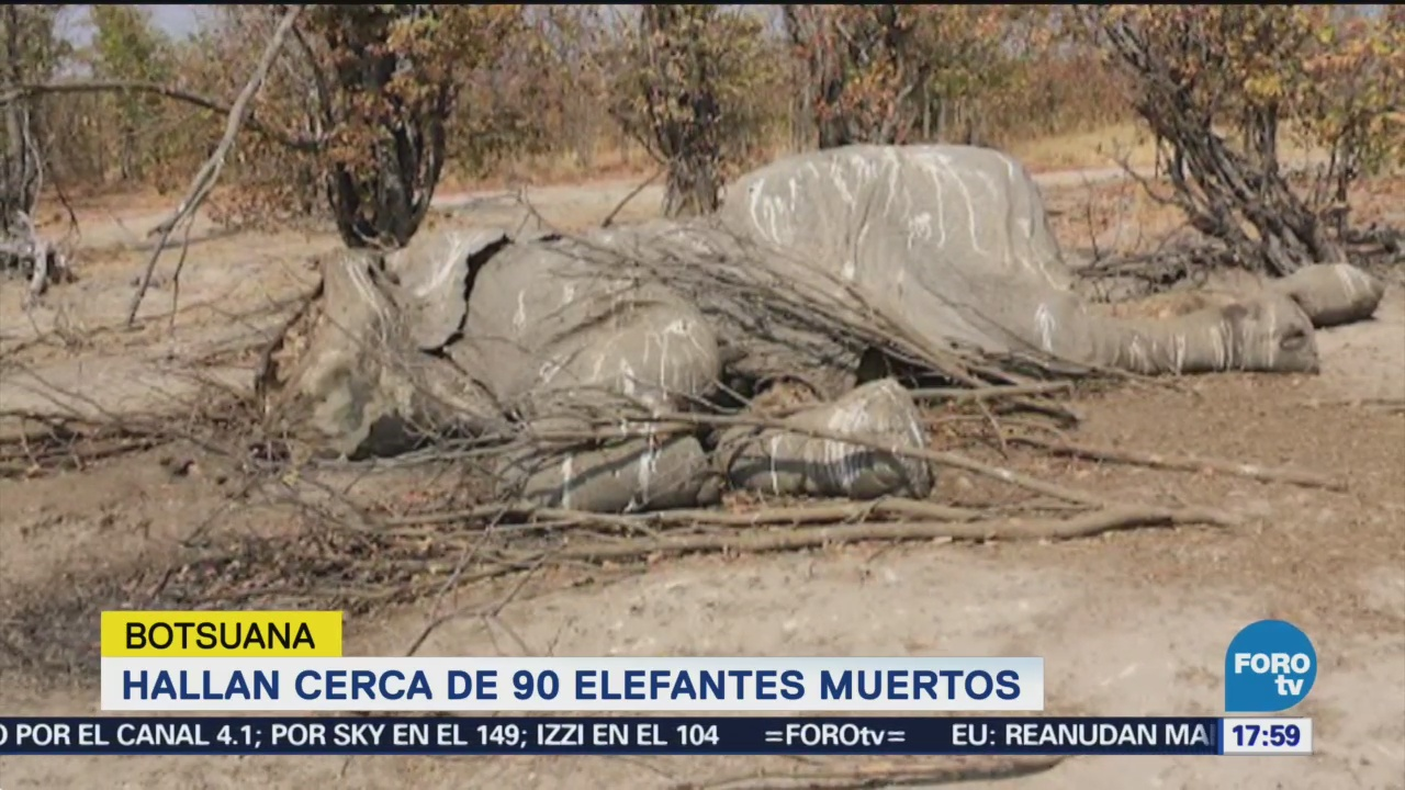 Matan Decenas Elefantes Arrebatarles Colmillos