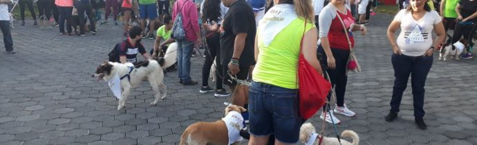 Usan perros en Nicaragua para ayudar al Zoológico Nacional