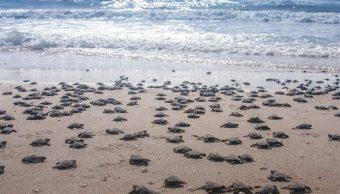 Santuario de tortugas marinas en Oaxaca