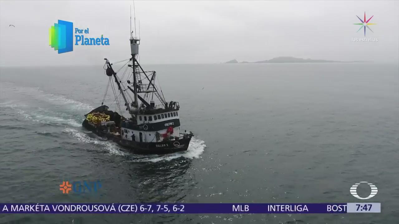 Pesca de sardina afecta ecosistema el Mar de Cortés