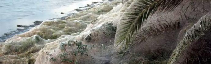 Telaraña Arañas Grecia Playa Video Mosquitos