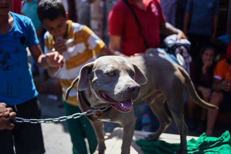 conoce-bolillo-perro-caravana-migrante-honduras