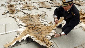 China autoriza comerciar productos de tigres y rinocerontes