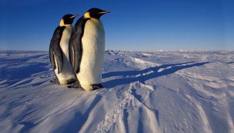 Tierra perdió 60 por ciento de animales salvajes en 44 años