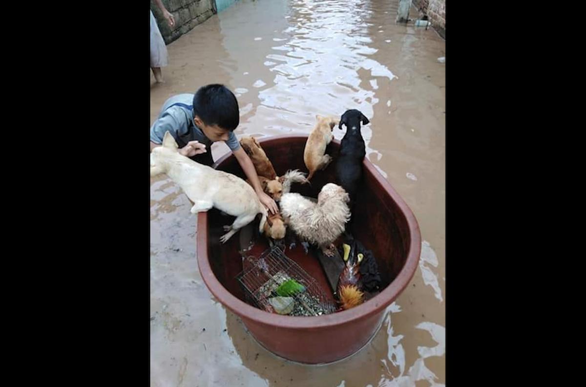 Niño Salva Mascotas Tina Huracán Willa
