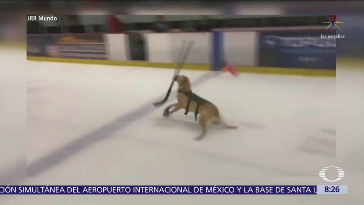 Perrito patina en hielo en Las Vegas