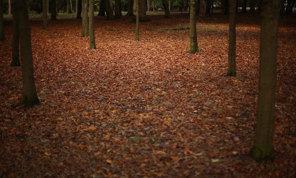 ¿Por qué se caen las hojas de los árboles en otoño?