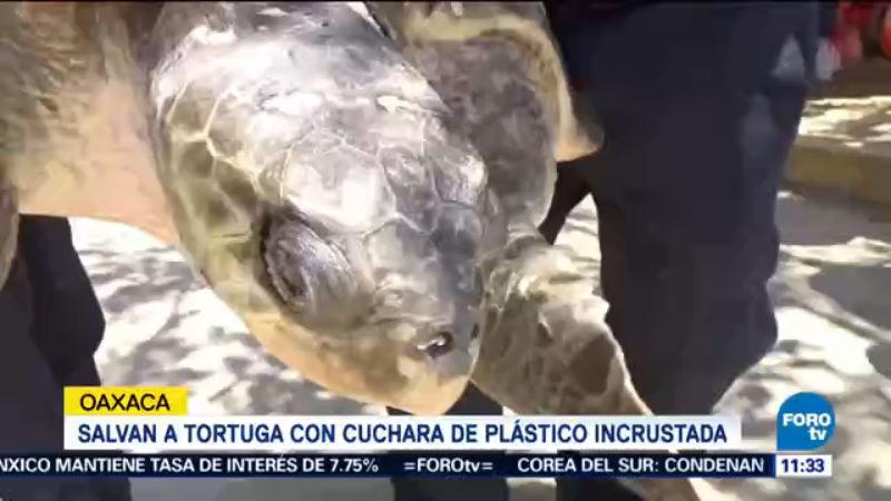 Rescatan a tortuga que se incrustó una cuchara en Oaxaca