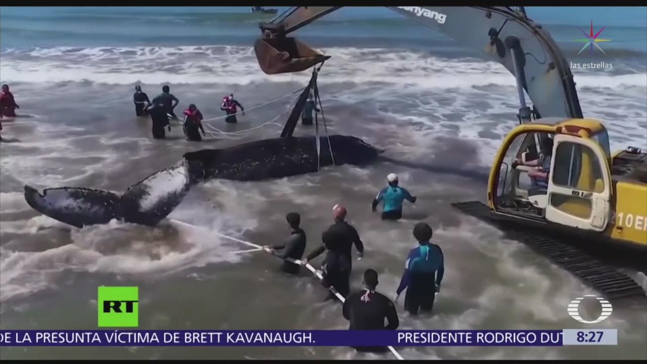 Rescatistas argentinos regresan al mar a ballena varada