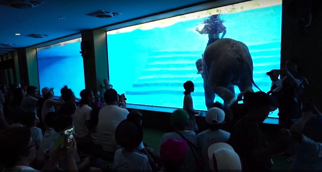 video-elefantes-abusados-show-acuatico-tailandia-zoologico