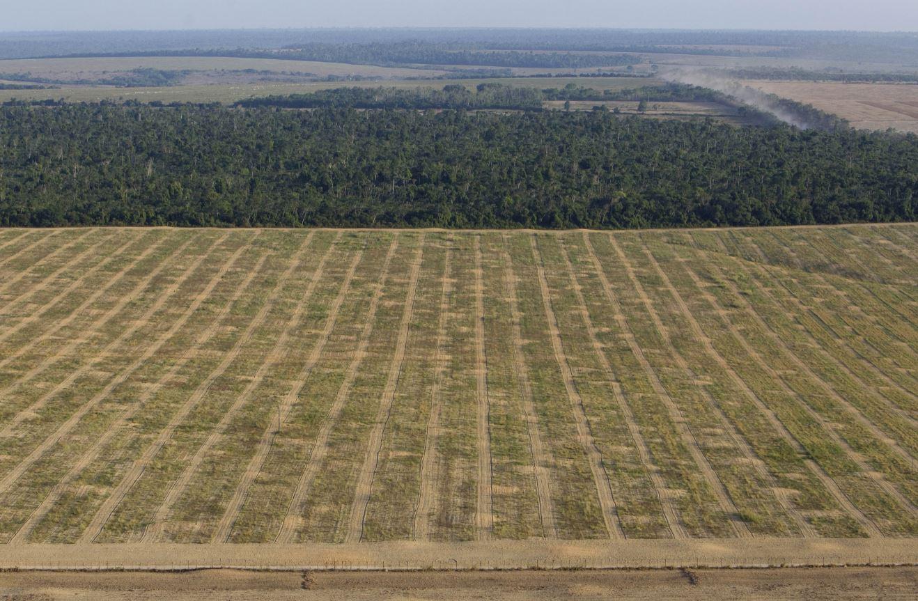 El 20 por ciento de la Selva Amazónica ha desaparecido en los últimos 30 años para abrir paso a campos de cultivo (AP Images)