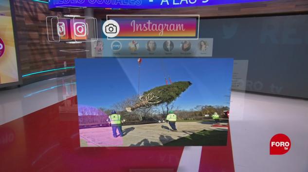 Abeto para Nueva York, un largo viaje en Instagram