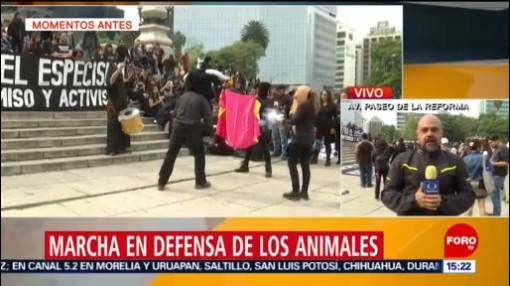 Marcha En Defensa De Los Animales En Cdmx Activistas Defensa De Los Animales Ciudad De México Cortes A La Circulación Avenida Reforma