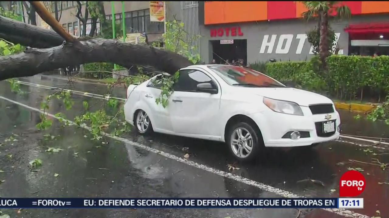 Se desploma árbol en Eje Central
