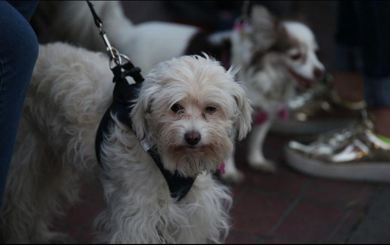 Suprema Corte avala IVA en alimentos para mascotas