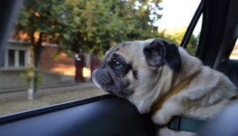 Perrito Auto Consejos Vacaciones Mascota Perro