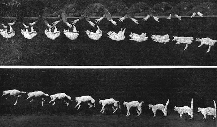 ¿Cómo sobreviven los gatos a las caídas altas?