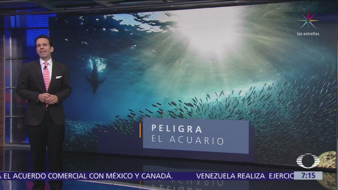 'El acuario del mundo, en peligro': Daños a las especies en el Mar de Cortés