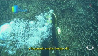 Por El Planeta Valle Submarino Isla De Vamizi Mozambique