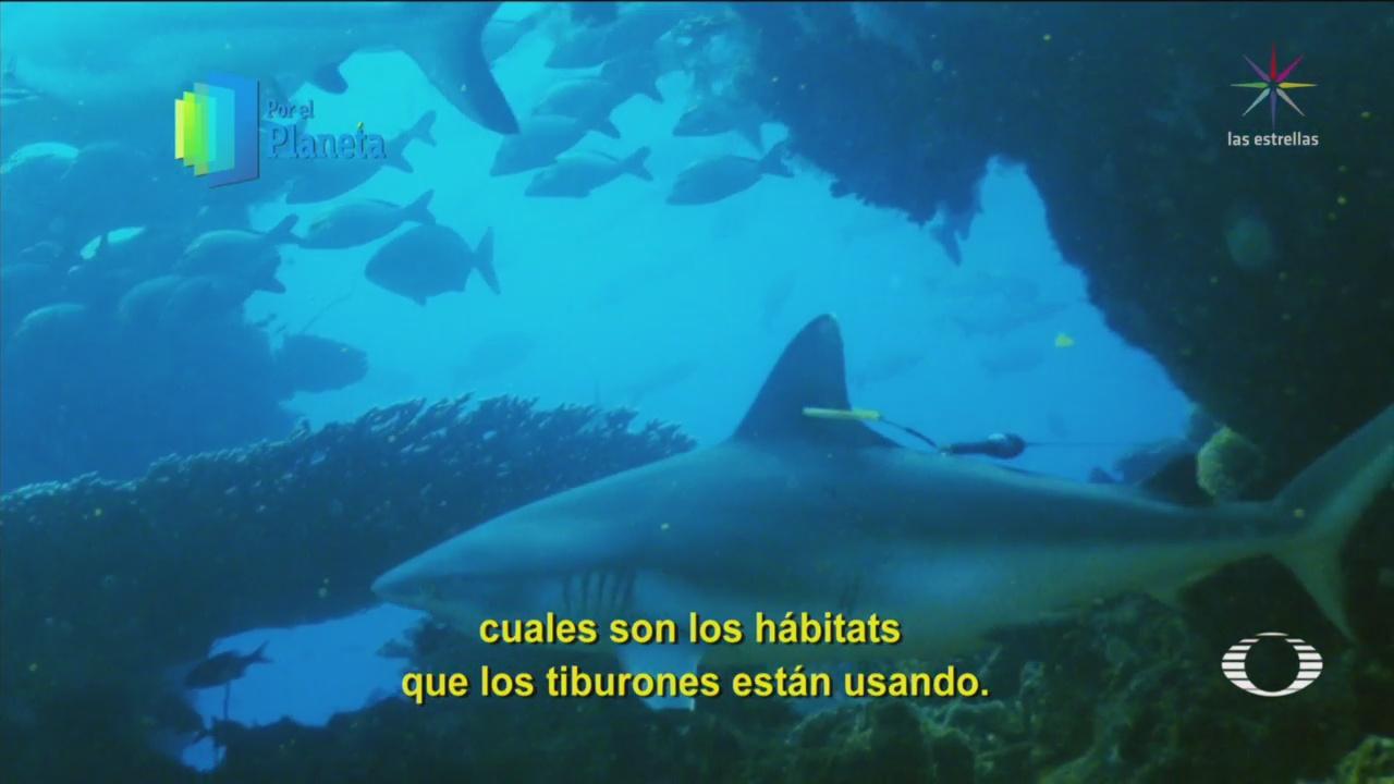 Por El Planeta Tiburones Isla Vamizi