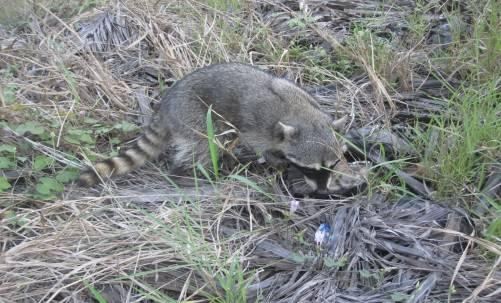 Reintegran a su hábitat a ejemplares silvestres