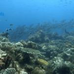 Vamizi, isla de corales que parecen jardines del mar