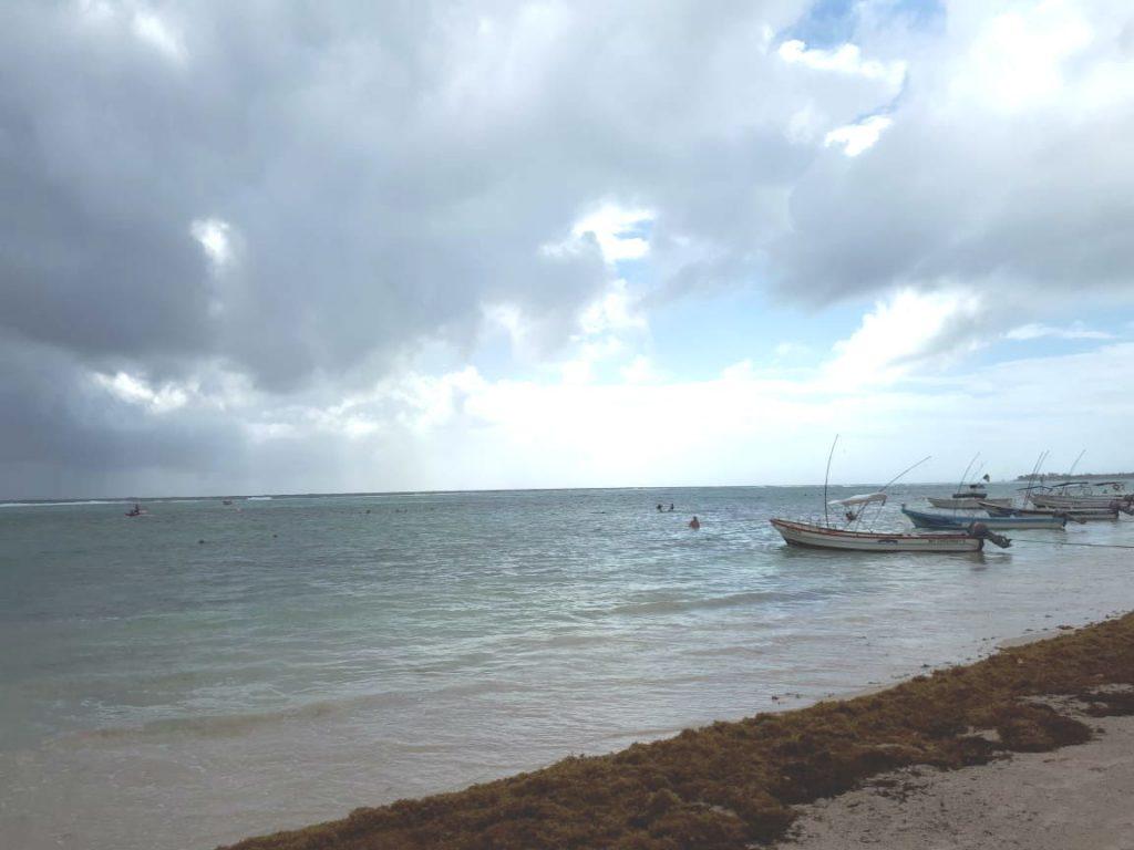 Ante nuevo arribo de sargazo, intensifican limpieza de playa