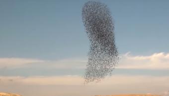 Video Impresionante Danza Aves Captan Estorninos
