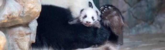 ¿Sabes cómo cuidan los animales a sus crías?
