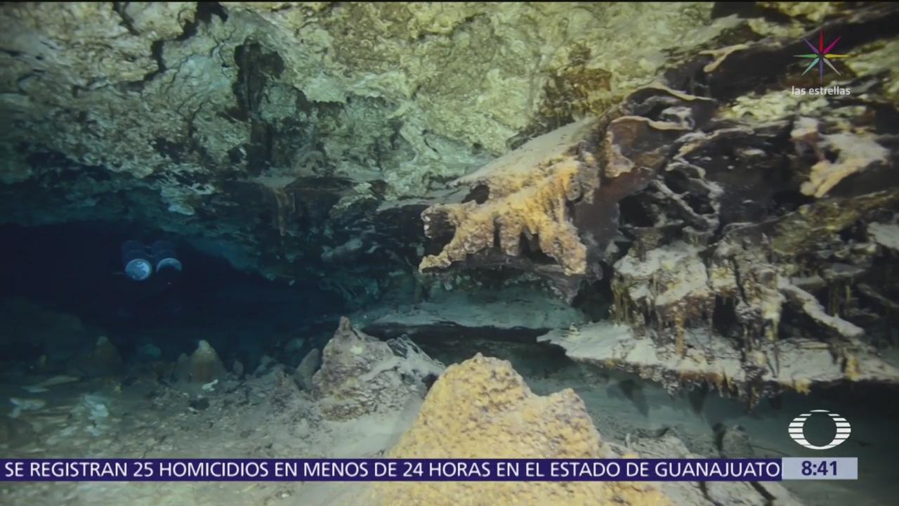 ¿Qué fauna ha sido hallada dentro de los cenotes?