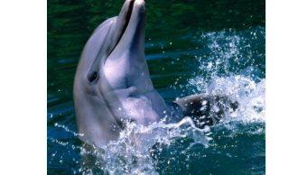 muerte de cuatro delfines centro de atracciones eeuu provoca protestas