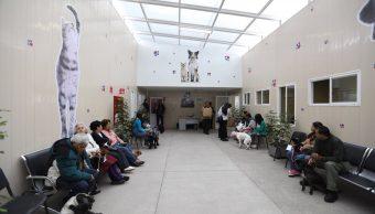 Foto: Hospital Veterinario CDMX tiene fallas en atención mascotas 6 febrero 2019